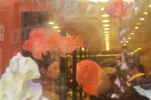 fishforblog
